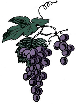 grape-vines-3