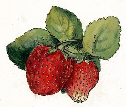 strawberries-01