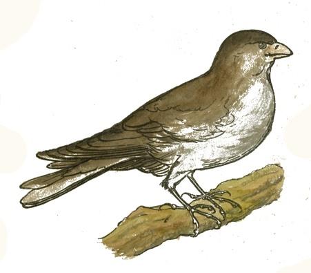bird-images-55