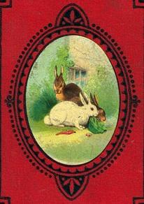 rabbits-06