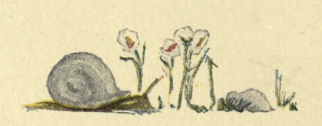 snail-flowers