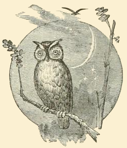 owl-images-29
