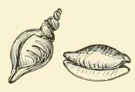 shells-01