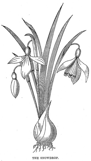 bw-flowers-18