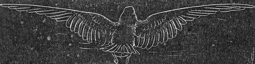 bird-etching-01