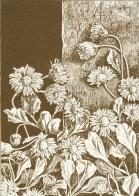 flower-23