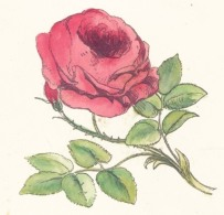 rose-pictures-08