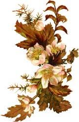 autumn-blooms